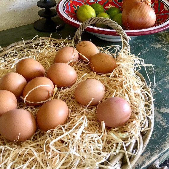 carnivore diet eggs
