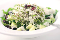 Raw Vegan Herbin Ranch Dressing