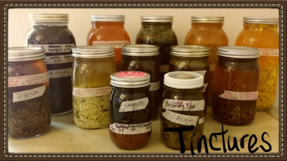 My first tinctures with organic herbs. #FirstAid