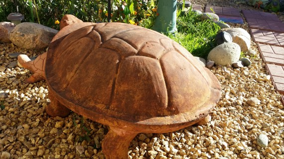 Giant turtle wants to give imaginary rides.