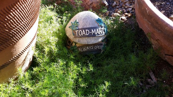 Cute Toad House - Always Open… that's how I feel about mom's house in general.