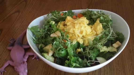 Salad with Scrambled Eggs on top… and Izzy Lizzy making an appearance.