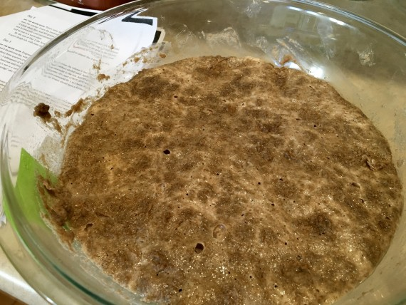 1 day after sourdough starter was made.