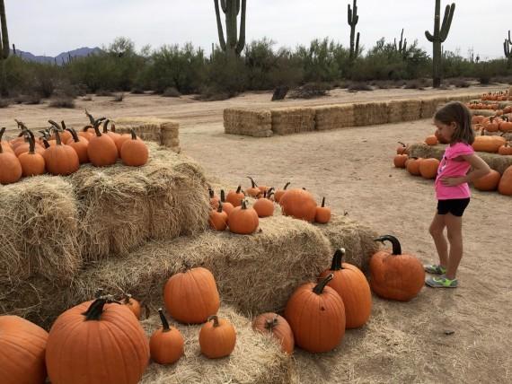 Pumpkins with a desert backdrop.